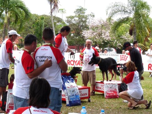 De beaux chiens ont été présentés lors de la 4ème édition de l'exposition multi-races de PF