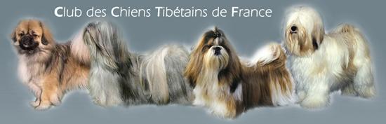 CCTF - Club de race Officiel, Association Nationale Officielle affiliée à la Société Centrale Canine - Agréé par le Ministère de l'Agriculture