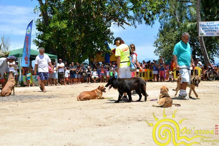 Le Club Canin de Moorea a présenté ses démos d'obéissance