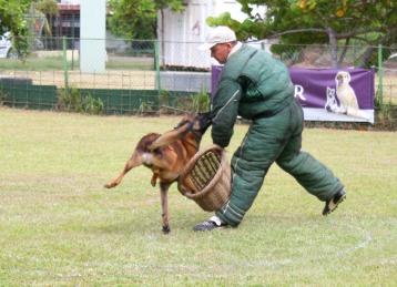 Le Club Canin de Pirae a accueilli le Championnat de Polynésie de chien d'utilité 2014