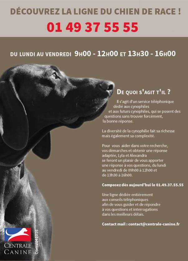 centrale canine contact